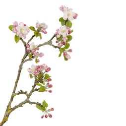 crabapple flower essence
